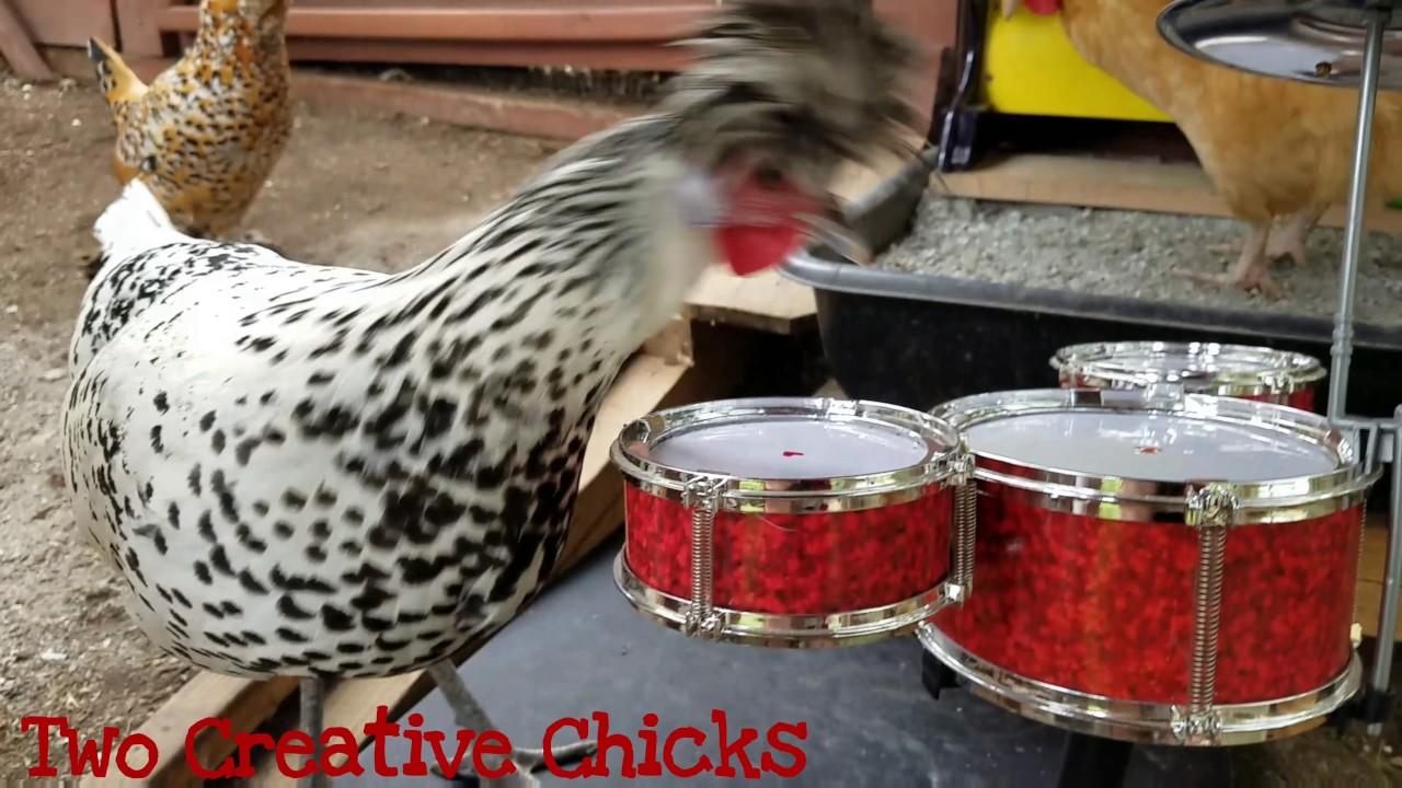 Chicken Plays A Drum Solo