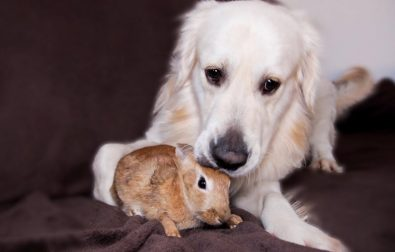 dog-and-bunny-rabbit-are-best-friends