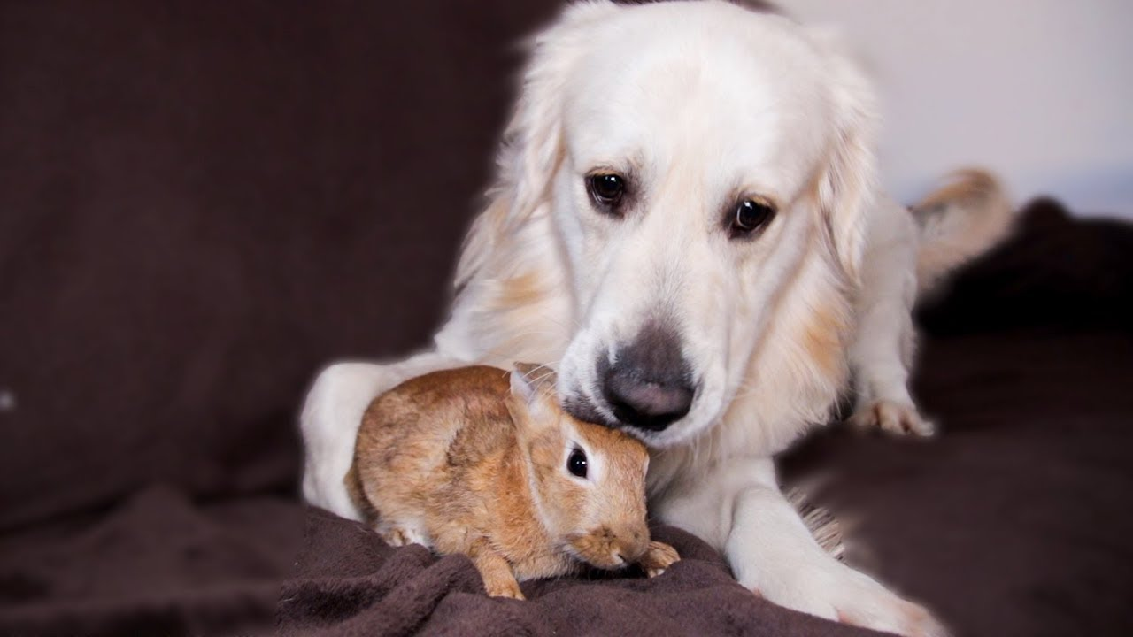 Dog And Bunny Rabbit Are Best Friends