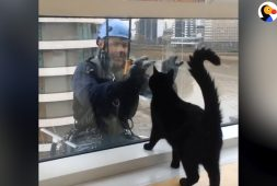 cat-loves-window-washer