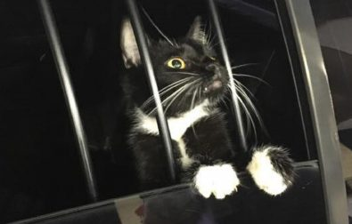 bones-the-cat-mistaken-for-a-burgler