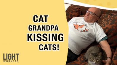 cat-grandpa-naps-with-cats