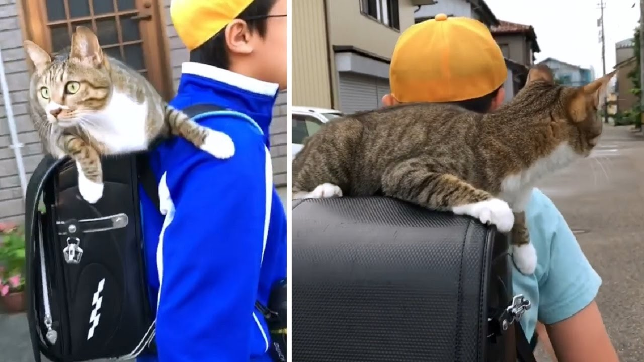 Cat Rides On Her Human's Backpack To School Each Day