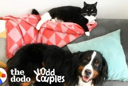 dog-learns-how-to-appreciate-new-sister-who-is-a-cat