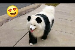 panda-or-puppy-you-decide