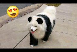 panda-or-puppy-you-decide