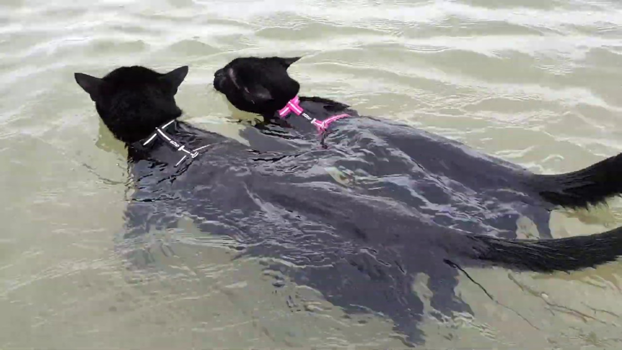Cats Enjoy Swimming Together For The First Time