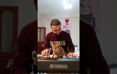 even-more-pianist-cat