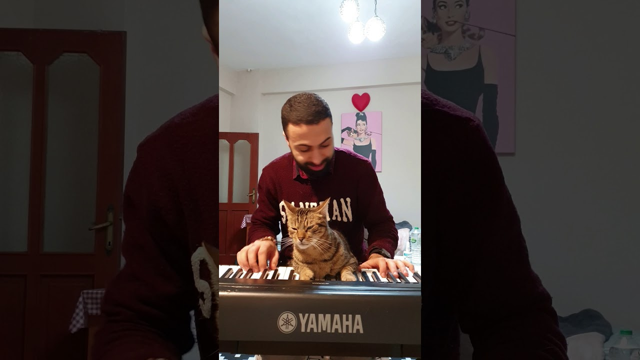 Even More Pianist Cat!