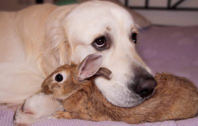 this-dog-and-rabbit-are-best-friends