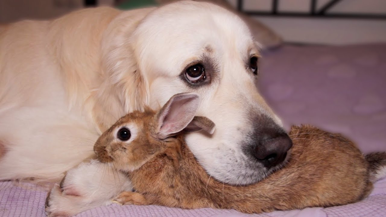 This Dog And Rabbit Are Best Friends