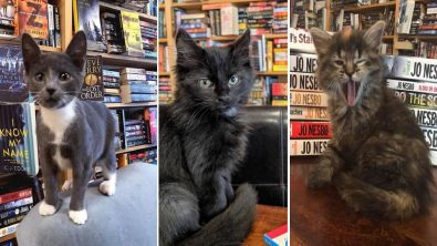 the-kitty-bookstore-where-kittens-and-readers-mingle