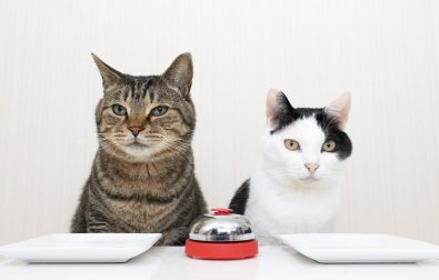 cats-using-a-bell-to-get-treats