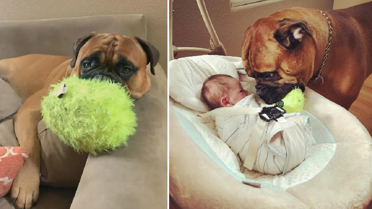 Dog Gives Baby His Toy To Comfort Him
