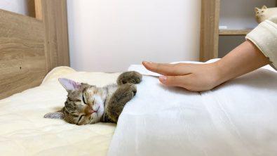 kitten-wants-to-sleep-in