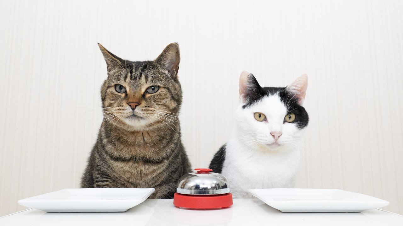 Cats Using A Bell To Get Treats