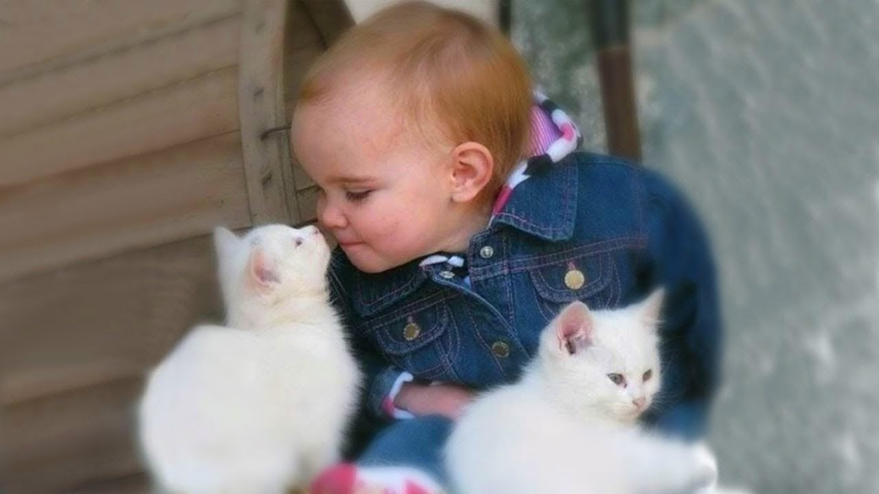 Cats And Babies Snuggling
