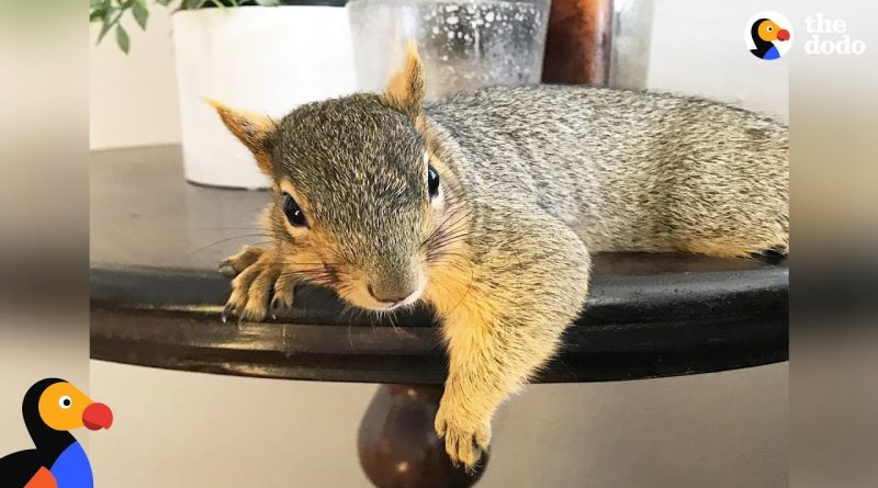 Mossy The Squirrel Has A Forever Home!