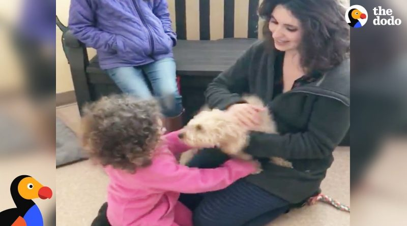 Dog Is So Happy After Being Reunited With Her Family