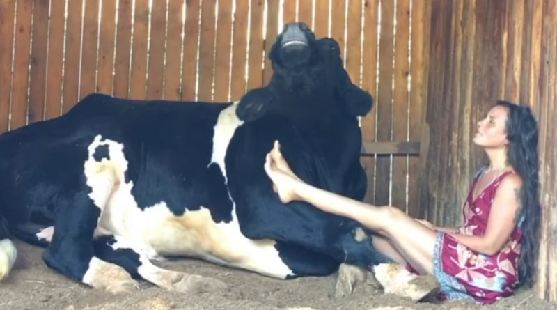 Woman And Cow Sing A Duet!