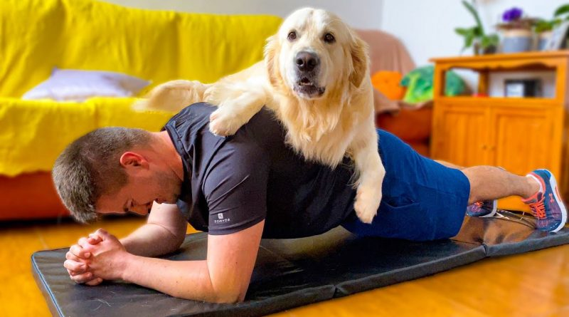 Exercising With A Golden Retriever Around Can Be Hilarious