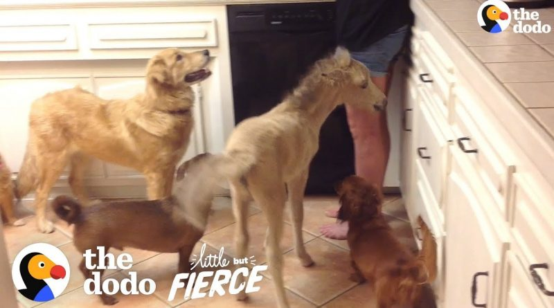 Horse Grows Up In A House Full Of Dogs