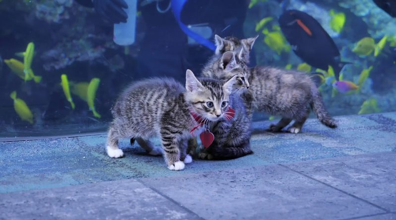 Kittens Explore The Georgia Aquarium