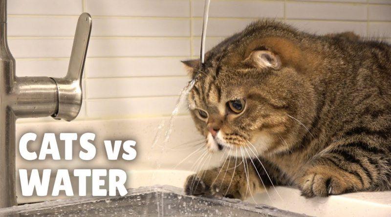 Cats Versus Water