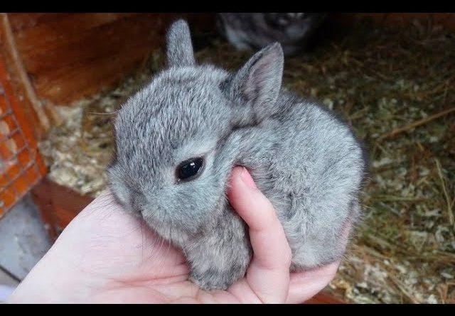 90 Seconds Of Precious Bunny Rabbits!