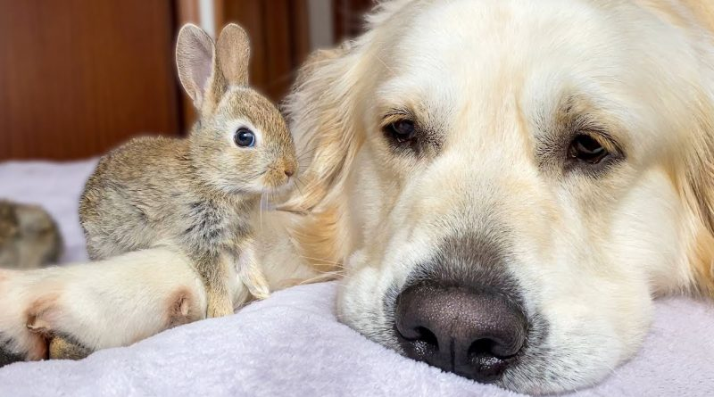 Dog, Bunnies, And Parakeet Are Best Friends
