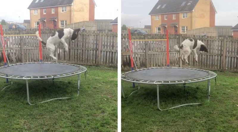 Dog Is Super Happy To Get His Own Trampoline!