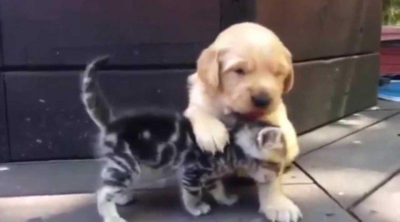 Kitten Loves His New Puppy Friend!