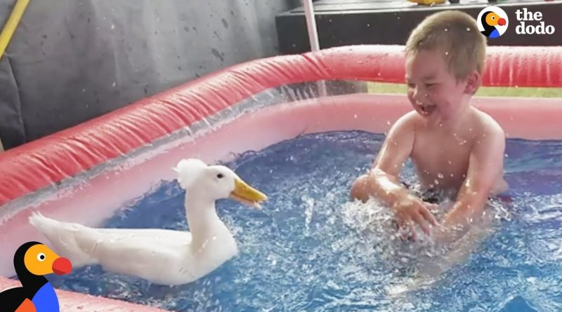 Boy And Duck Are The Best Of Friends!