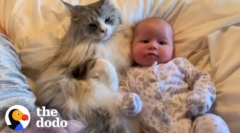 Cat Becoming A Baby's Best Friend 🐈 👶