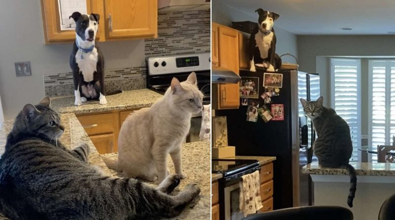 A Dog Raised By Cats Thinks He Is A Cat 🐾 🐈 🐶