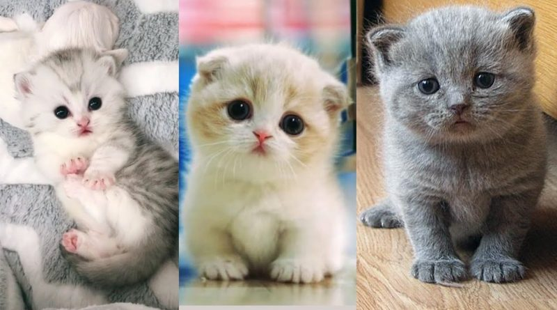 These May Be The Cutest And Fluffiest Kittens