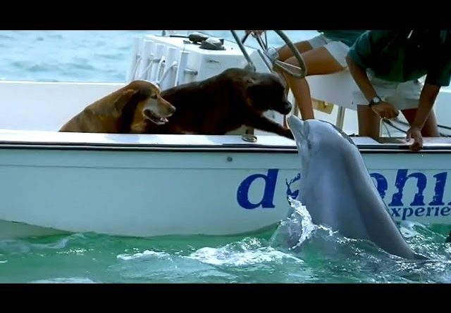 Dolphin Kisses Dog And Then Jumps For Joy 🐬 🐕 💋