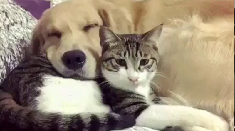 This Cat And Dog Are The Very Best Of Friends!