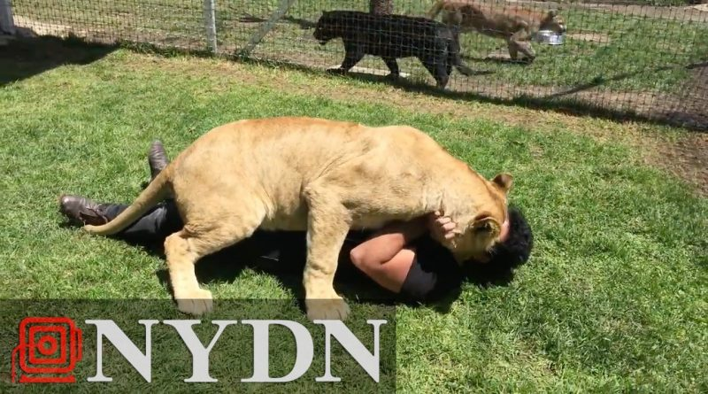 Lioness Reunited With Her Adopted Human