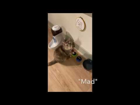 Cat Communicates With Buttons For Catnip!