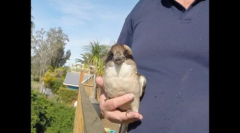 Hug Your Kookaburra Day!
