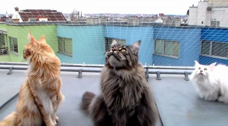Fluffy Kitties Chatting About Birds