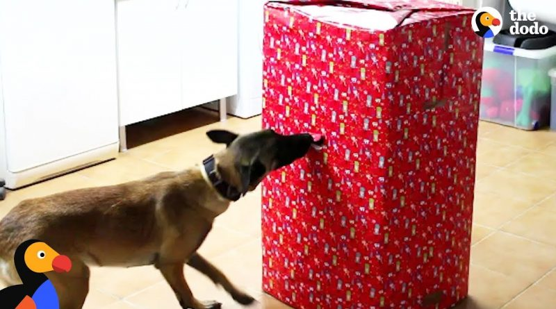 Dogs Open Their Favorite Gift Ever! 🐕 🎁