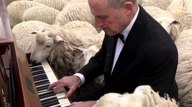 Live Concert For Sheep To Enjoy 🐑 🎹