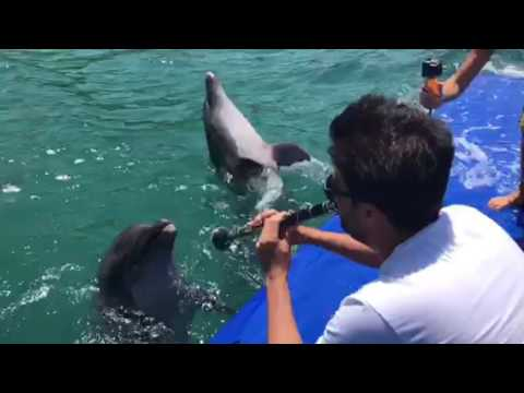 Dolphins Sing Along With Clarinet Playing 🎶 🐬