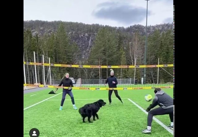 Dog Enjoys Playing Volleyball With Human Friends 🏐 🐕