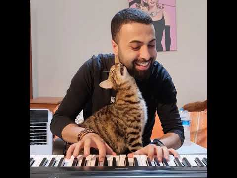 Pianist Cat Is Back 🎹 🐈