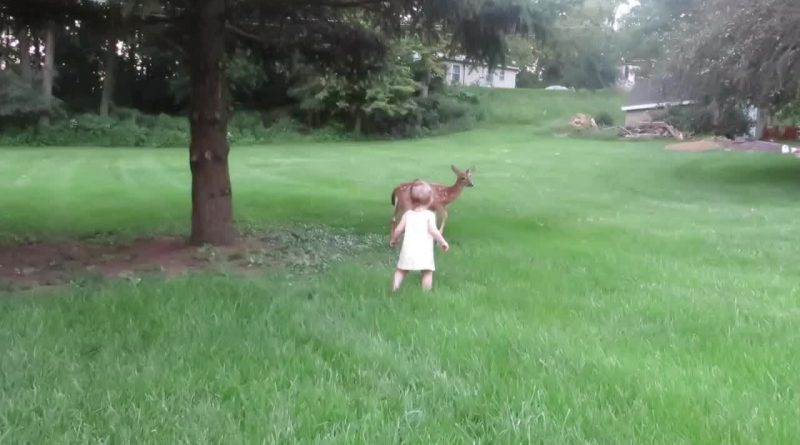 Little Girl Pets Baby Deer 👧 🦌
