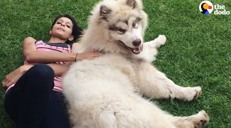 Enormous Dog Thinks He Is Just A Lap Dog