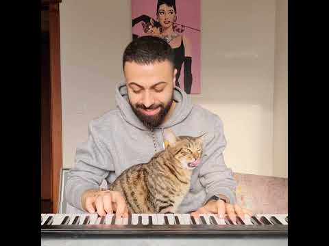 Kitty Loves The Piano 😺 🎹